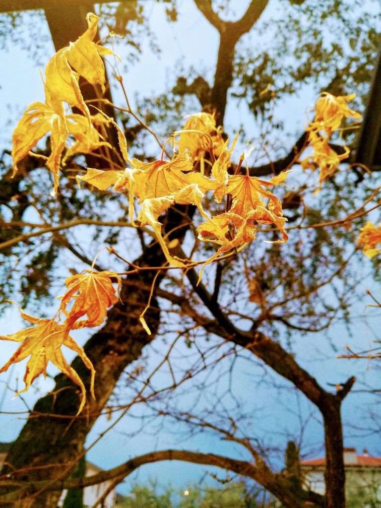Yellow dried leaves